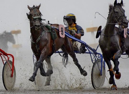 2014-07 Pferderennen im Watt bei Cuxhaven1