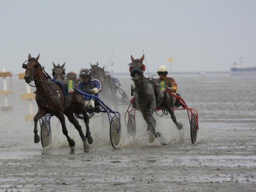 2014-07 Pferderennen im Watt bei Cuxhaven4