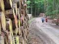 Jedenfalls viel Holz vor der Hütte.